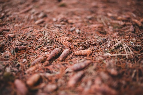 Vermicompost - 3 Best Tips For Effective Uses