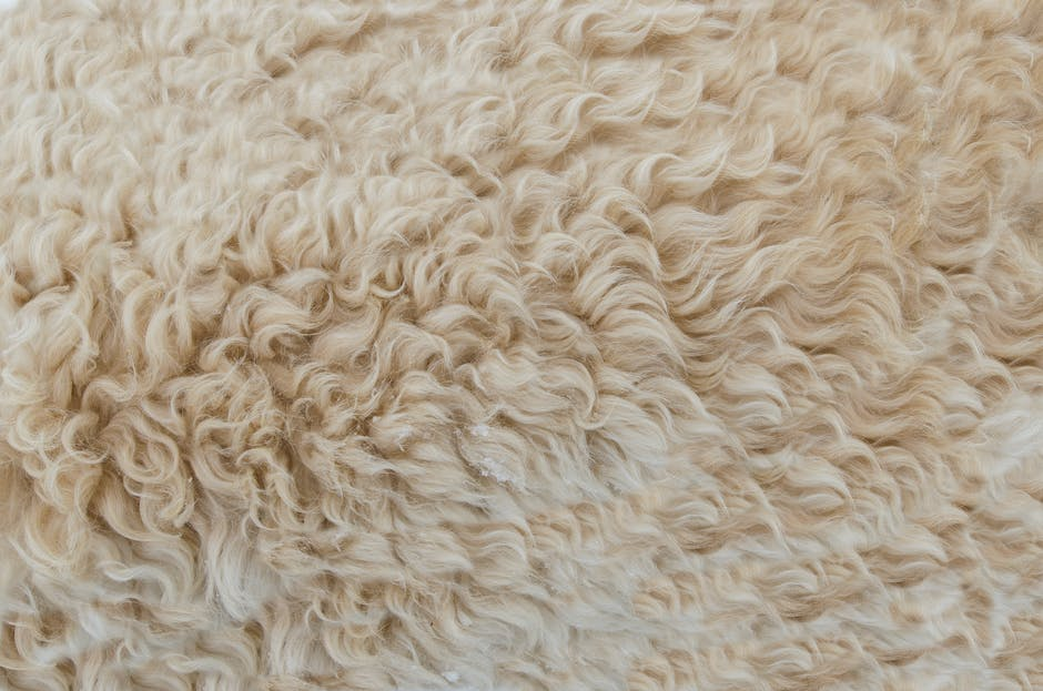 A close up of a sheep